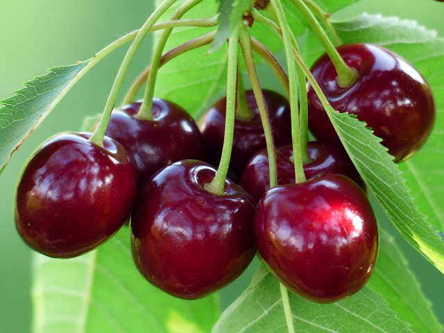 cherry for gout management